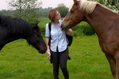 horsecomms